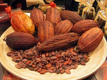 открытие какао